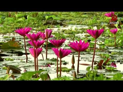 Xxx Mp4 Water Lily Natural Beauty Of Bangladesh 3gp Sex