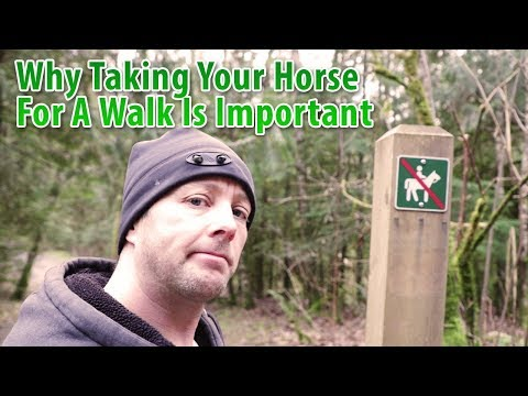 Why Taking Your Horse For a Walk Is Important
