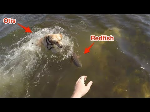 Tampa Bay Fishing For Redfish & Snook [Lure Testing Trip]