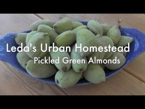Pickled Green Almonds