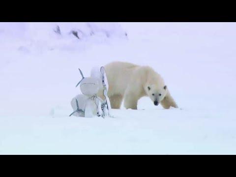 Polar Bear Rescues Our Blizzard Spy Camera | Polar Bear Spy On The Ice | BBC Earth