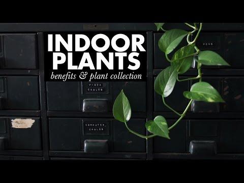my house plants!