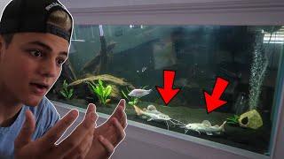 $2000 PLATINUM FISH TRANSFER to NEW AQUARIUM!!!