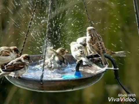SAVE BIRDS THIS SUMMER🕊🐦🙏🙏