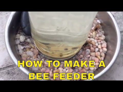DIY ~ How to make a Bee Feeder ~ Helping Honey Bees 🍯 🐝