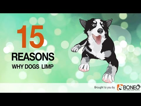 Why is My Dog Limping? 15 Causes of Lameness in Dogs