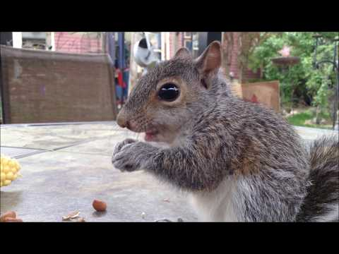 Woodworking: Rescue Baby Squirrel House // How-To Part 1