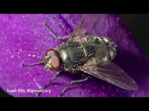 How to Get Rid of Outdoor Flies - DIY Pest Control