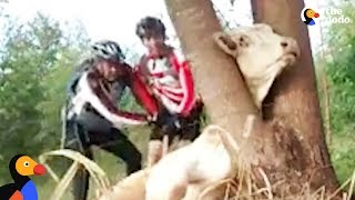 Cow Stuck in Tree Rescued by Bikers Who Won