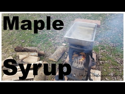 The Making of Maple Syrup From Just 7 Trees!