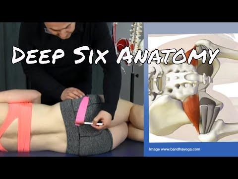Anatomy & Palpation of the Deep Six Muscles