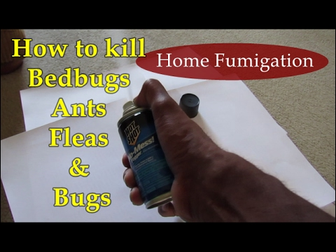 DIY pest control - how to kill bed bugs & ants | Why live with bugs