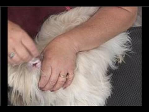 Grooming Long Haired Dogs : Cleaning Dog Ears