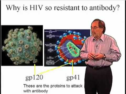 Why is HIV so resistant to antibodies?