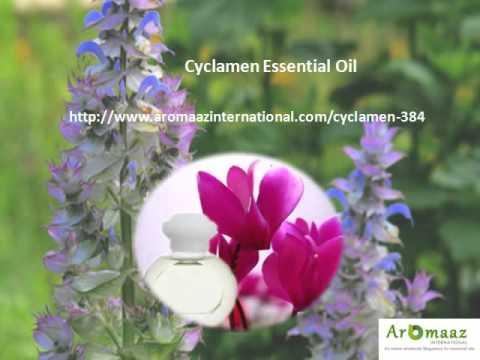Buy Bulk Natural and Organic Essential Oils