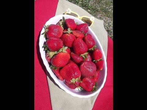 STRAWBERRY LEMONADE a delicious summer treat