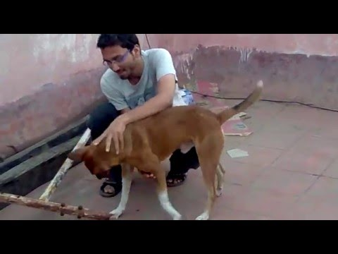 Funny & Angry Dog ...! How to Control Dog ?  ( Must Watch )