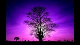 8 Hour Sleep Music | Relaxation Music | Calming Music