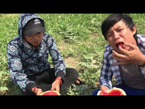 Watermelon Farm - Cambodia watermelons | Agriculture of Asia