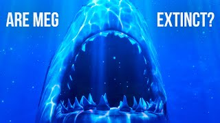 Could Megalodon Sharks Still Live In the Ocean?