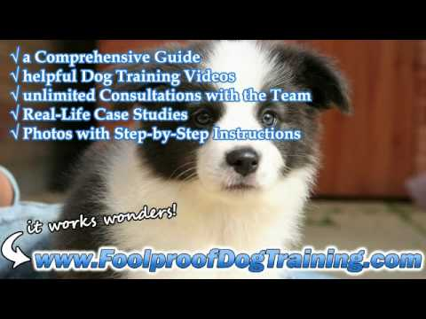 Barking Dogs How To Stop Neighbours Dog - Dog and Puppy Training