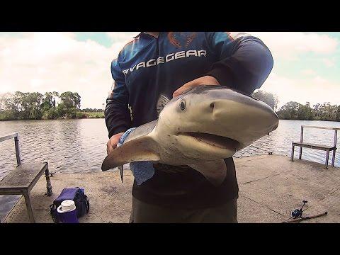 Bull Shark Fishing