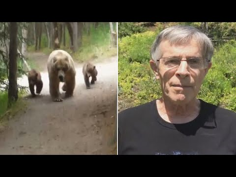 Hiker Records Video As Mama Bear And Cubs Follow Him Along Trail