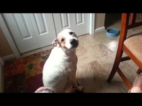 Dog crying for food