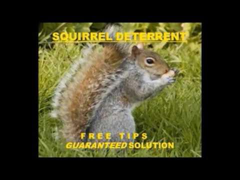 Squirrel Deterrent Video