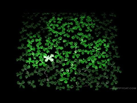 Can You Find The 4 Leaf Clover?