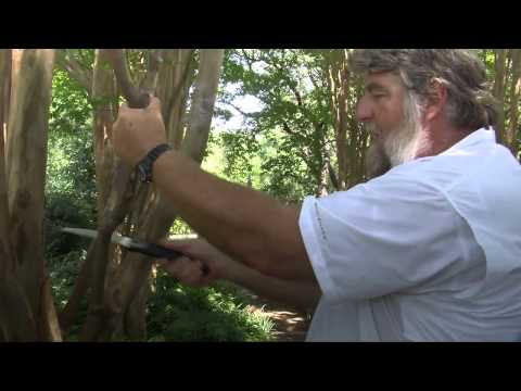 Cutting a Tree Branch
