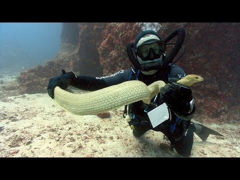 Sea Snakes | JONATHAN BIRD'S BLUE WORLD