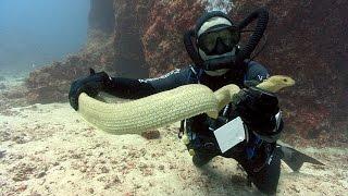 Sea Snakes | JONATHAN BIRD
