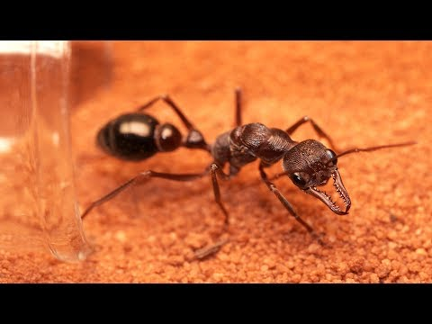How to Build an Ant Nest | Tubs & Tubes