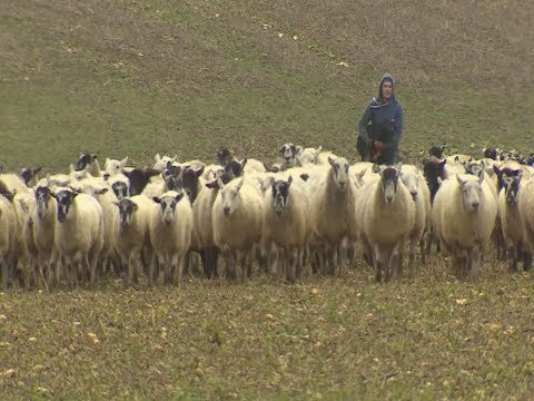 Farmers reassured about subsidies after Brexit