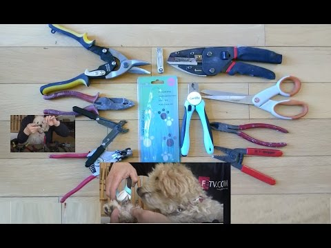 DIY Dog Nail Cutting Using Your Own Tools or Dog Nail Clippers