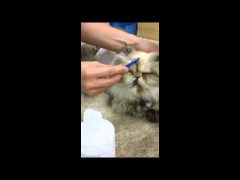 Eye Cleaning Tutorial