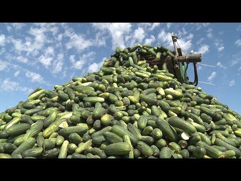 A Big Dill | Texas Pickles