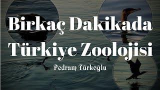 Kısa Belgesel: Birkaç Dakikada Türkiye Zoolojisi