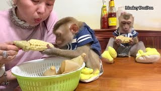 Baby Monkey DouDou Eats Boiled Corn With Mommy Very Funny