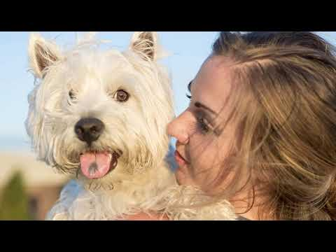 Interesting Facts About West Highland Terrier