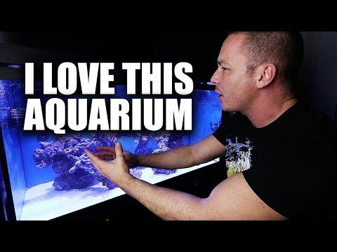 EASY saltwater aquarium setup