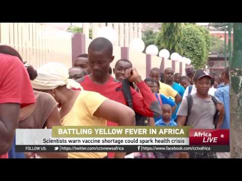 Scientists warn Yellow fever vaccine shortage could spark health crisis