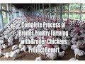 Download Complete Process of Broiler Poultry Farming with Broiler Chickens Project Report MP3,3GP,MP4