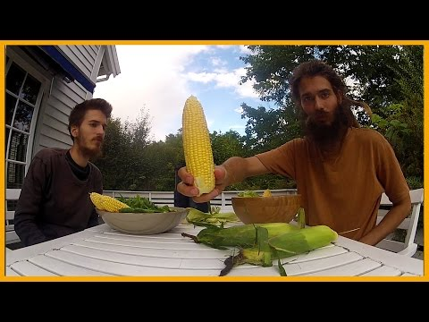 HOW TO EAT RAW SWEET CORN STRAIGHT OFF THE COB