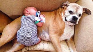Los Mejores Bebés Lindos Jugando Con Perros 🐶 Bebes Chistosos Jugando Con Perros Cachorros