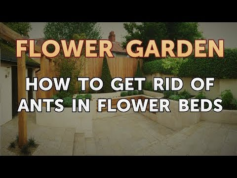 How to Get Rid of Ants in Flower Beds