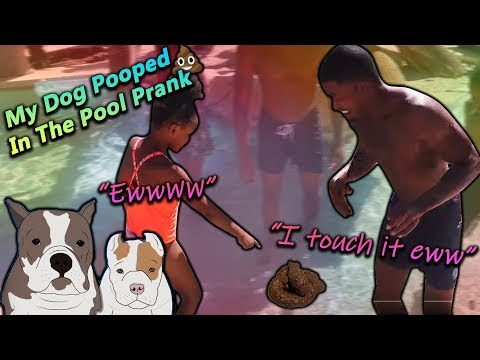 My Dog Pooped In The Pool Prank