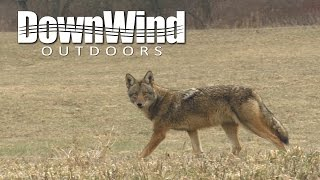Eastern Coyote Hunting:  Dump