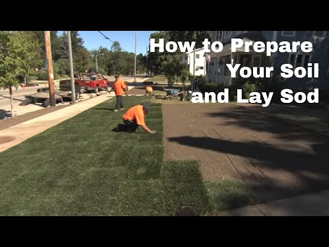 How to Prepare Your Soil and Lay Sod